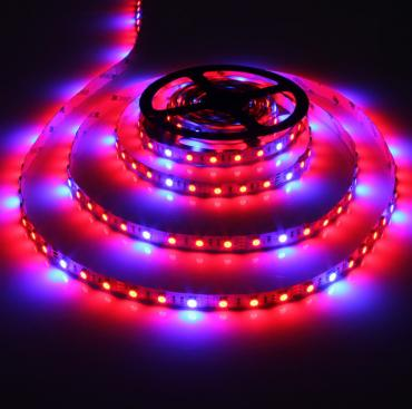 Plant Growth SMD5050 60led/m IP20 Led Strip light